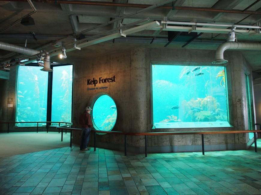 Image Gallery Monterey Bay Aquarium Inside